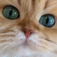 This face 😻 is when i can't decide what to buy at itsmiel.com 🙀 #jewelry #jewels #catsofinstagram